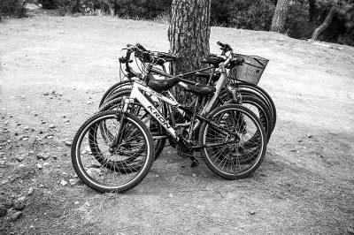 buyukada bisiklet turlari 400x266
