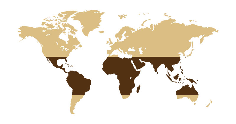 kakao haritasi