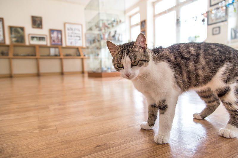 kedi muzesi gezi yazisi