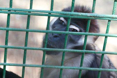 gaziantep hayvanat bahcesi maymun 400x266