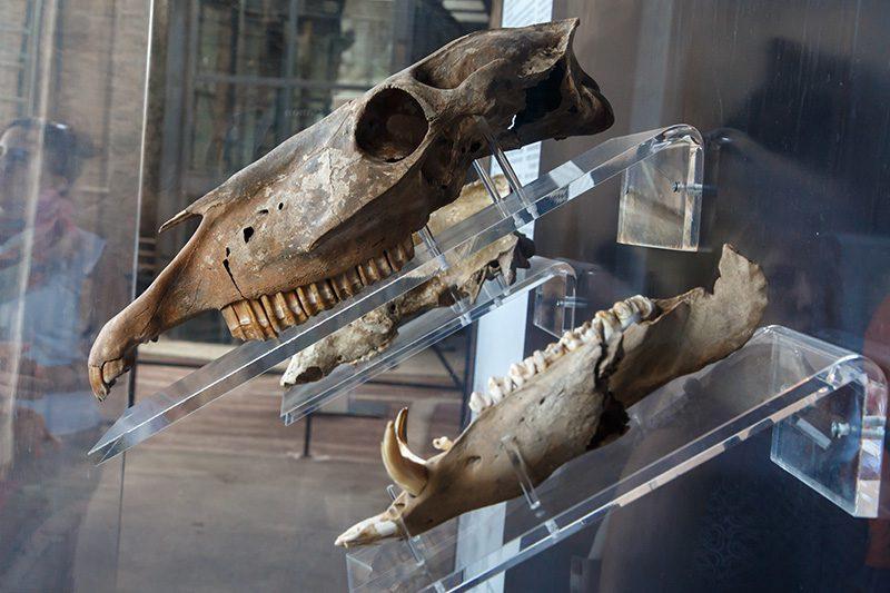 roma kolezyum hayvan iskelet kalintilari