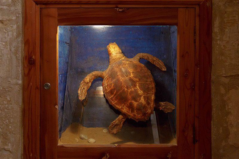 gozo dogal bilim muzesi kaplumbaga