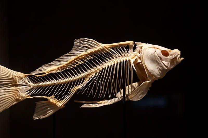 malta dogal tarih muzesi balik iskeleti