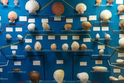 malta dogal tarih muzesi deniz kabugu vitrini 400x266