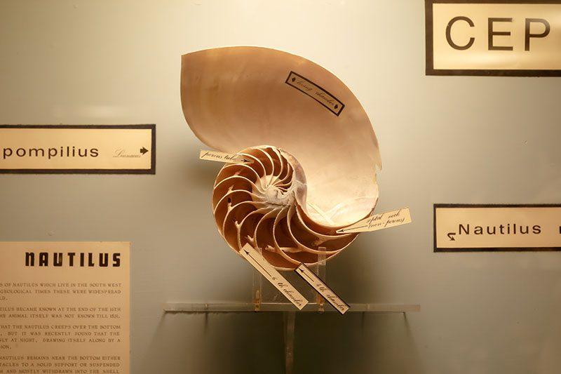 malta dogal tarih muzesi deniz kabugu