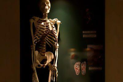 malta dogal tarih muzesi insan iskeleti 400x266