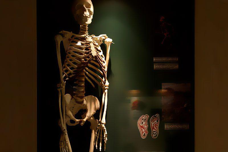 malta dogal tarih muzesi insan iskeleti