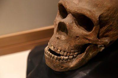 malta dogal tarih muzesi insan kafatasi 400x266