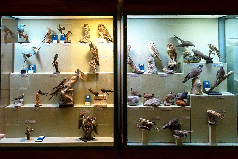malta dogal tarih muzesi kus odasi