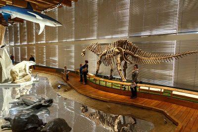 prag ulusal muze dinozor hayvanlar 400x266
