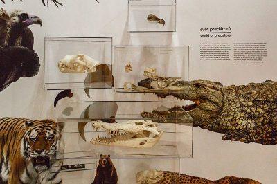 prag ulusal muze timsah iskeleti 400x266