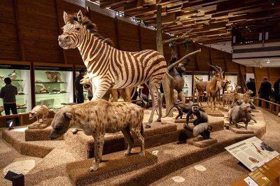 prag ulusal muze vahsi hayvanlar 400x266