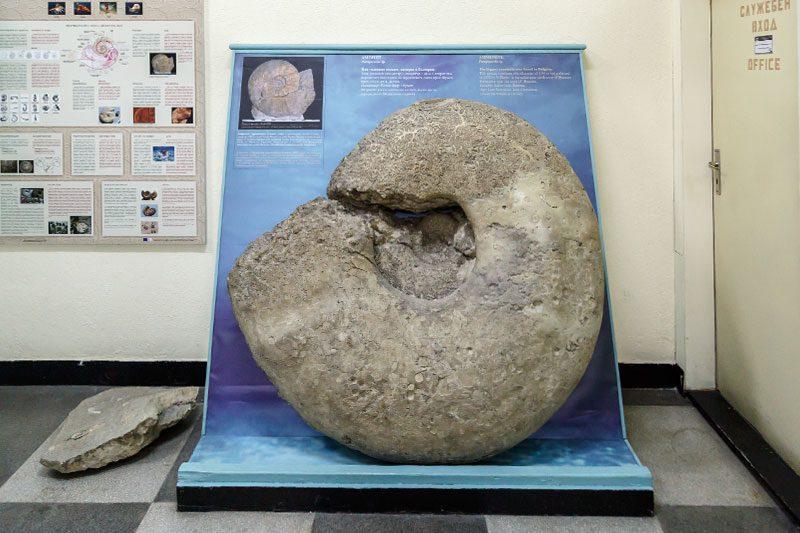 sofya dogal tarih muzesi ammonit tasi