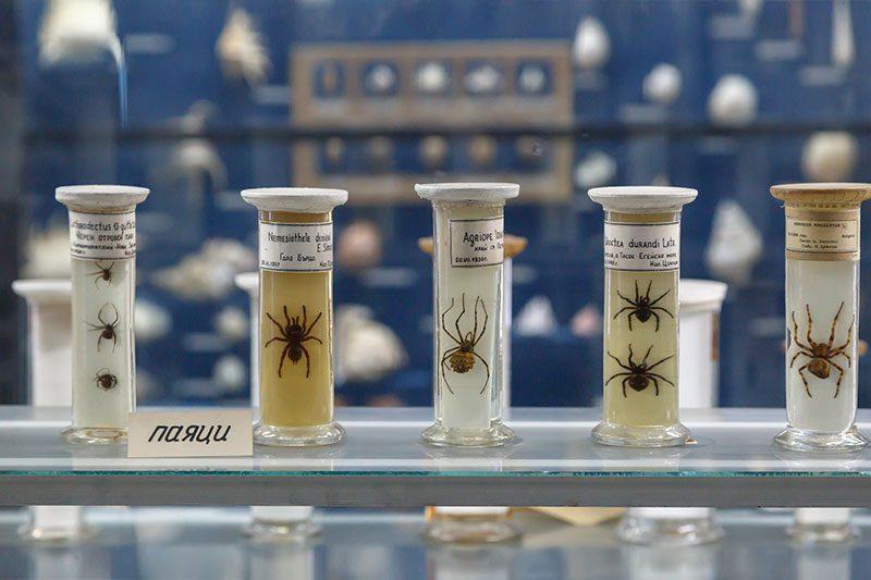 sofya dogal tarih muzesi bocek cam tup