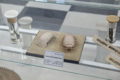 sofya dogal tarih muzesi bocekler 400x266