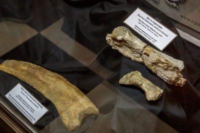 sofya dogal tarih muzesi dinozor kemigi 400x266