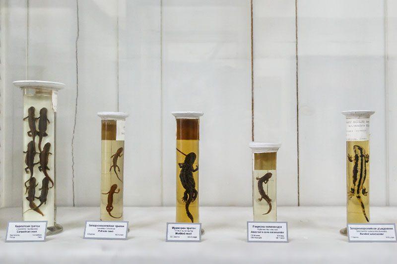 sofya dogal tarih muzesi sua alti canlilari