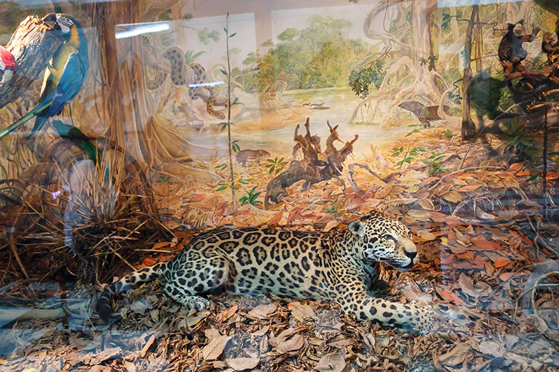 sofya dogal tarih muzesi vahsi hayvanlar
