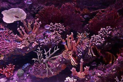 antalya akvaryum mercanlar bitkiler 400x266
