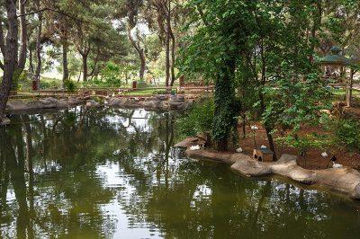 antalya hayvanat bahcesi ordek havuzlari 400x266