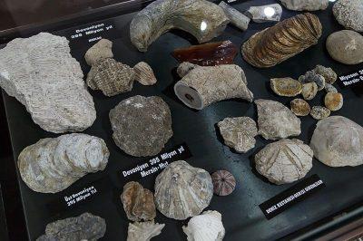 mersin arkeoloji muzesi fosiller 400x266