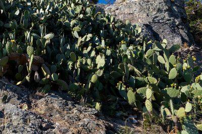 bodrum gumusluk eski karakaya koyu bitki ortusu 400x266
