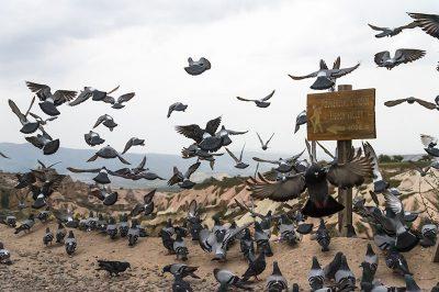 kapadokya guvercinlik vadisi gezilecek yerler 400x266