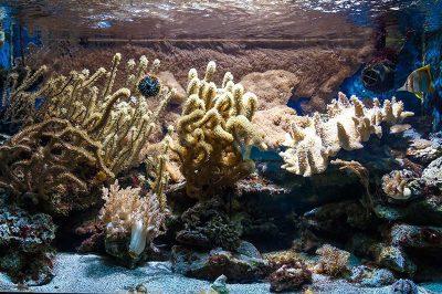amsterdam artis hayvanat bahcesi renkli deniz bitkileri 400x266