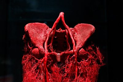 amsterdam body world vucut sinirleri 400x266