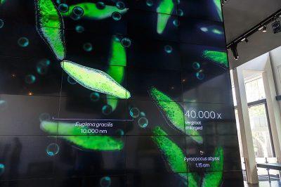 amsterdam micropia damga karti projeksiyon ekrani 400x266