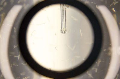 amsterdam micropia solucanlar 400x266