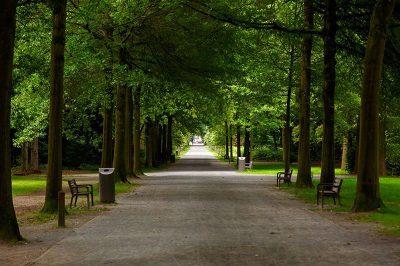 antwerp middelheim park muzesi yuruyus ormani 400x266