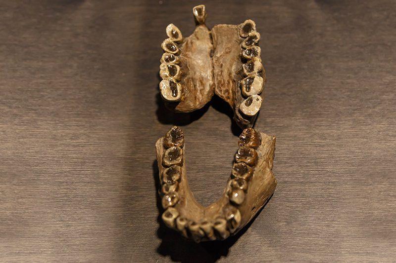 bruksel dogal bilimler muzesi tarih oncesi insan disleri