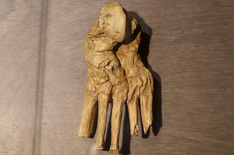 bruksel dogal bilimler muzesi tarih oncesi insan eli