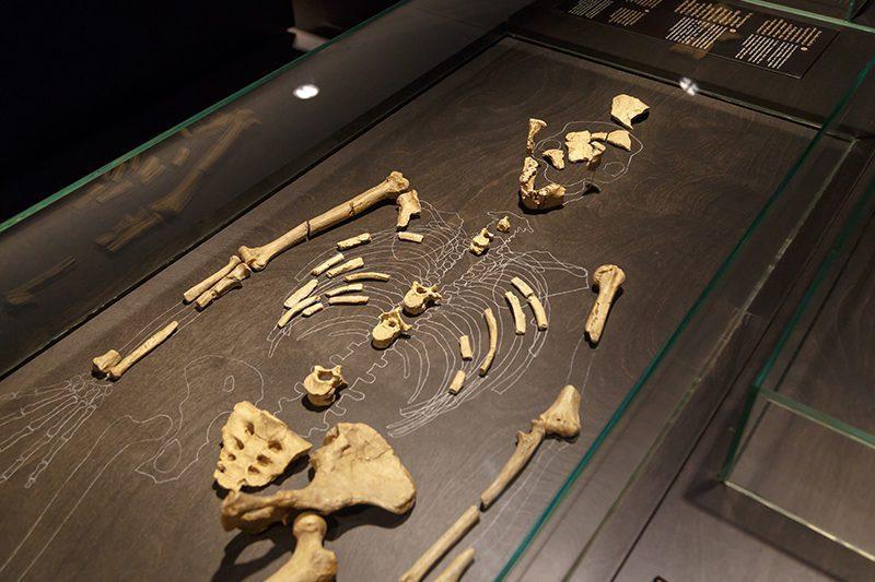 bruksel dogal bilimler muzesi tarih oncesi insan kemikleri
