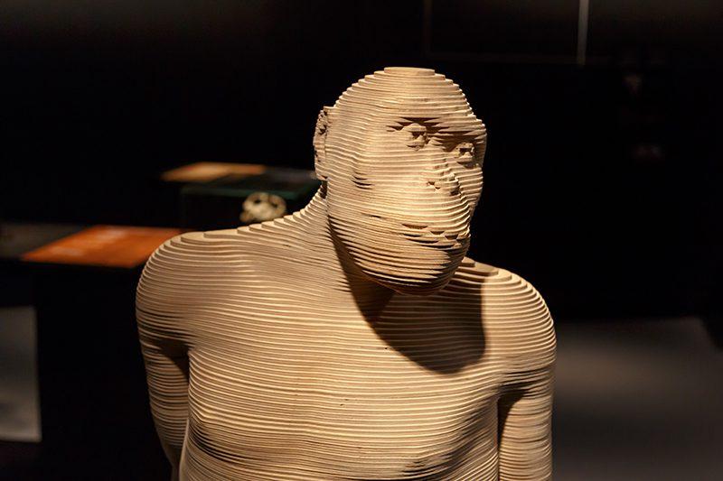 bruksel dogal bilimler muzesi tarih oncesi insan modeli