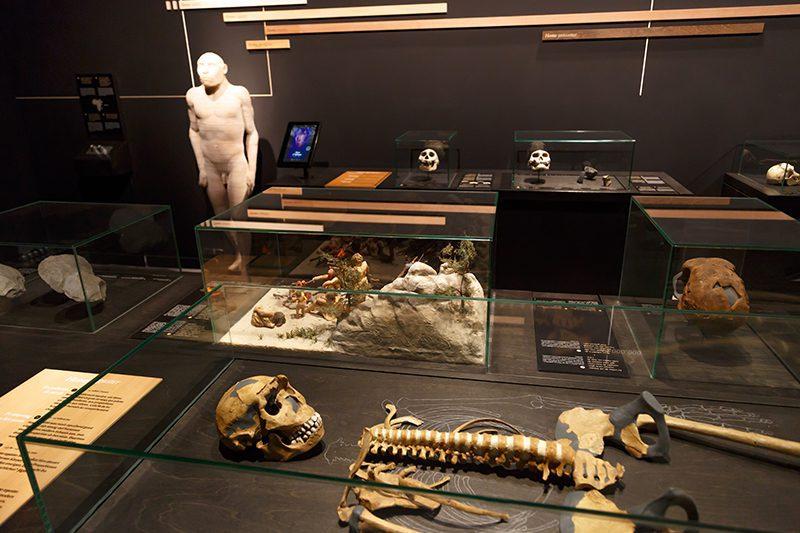 bruksel dogal bilimler muzesi tarih oncesi insan muzesi