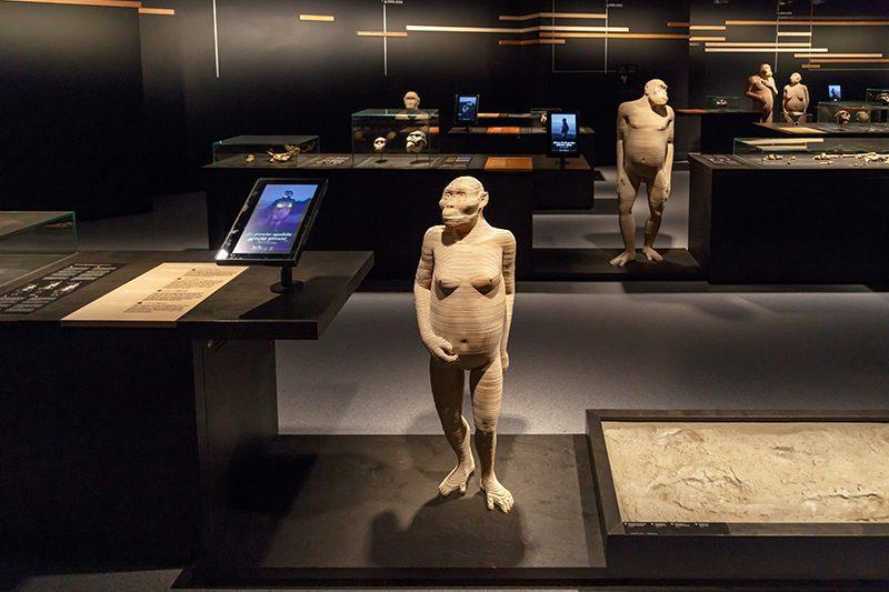 bruksel dogal bilimler muzesi tarih oncesi insanlar