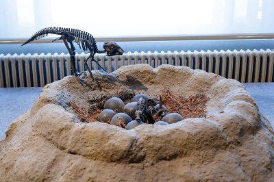 bruksel dogal tarih muzesi dinozor yumurtasi 400x266