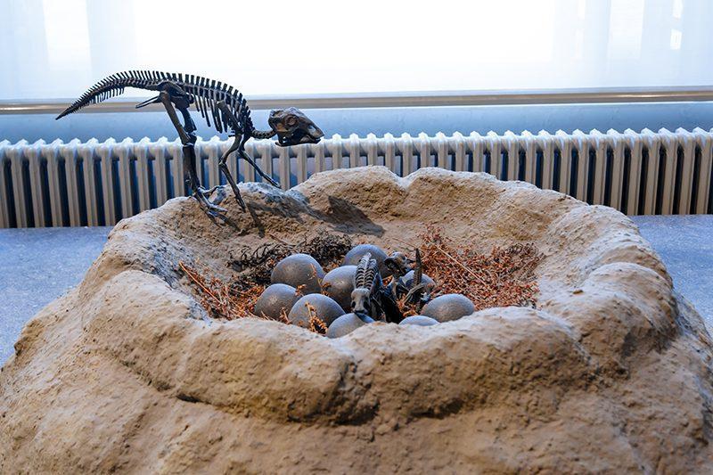 bruksel dogal tarih muzesi dinozor yumurtasi