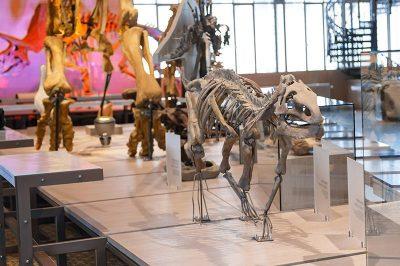 bruksel dogal tarih muzesi dinozorlar 400x266