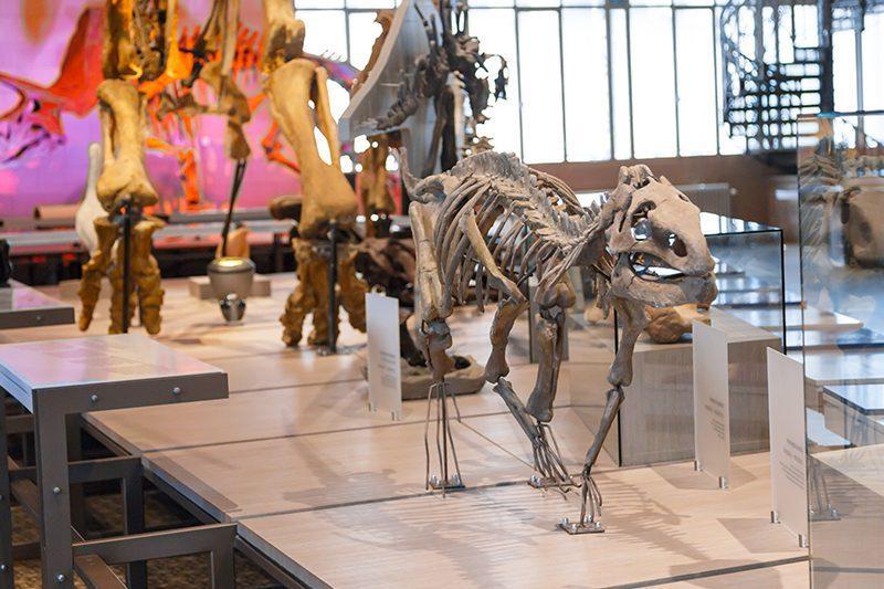 bruksel dogal tarih muzesi dinozorlar