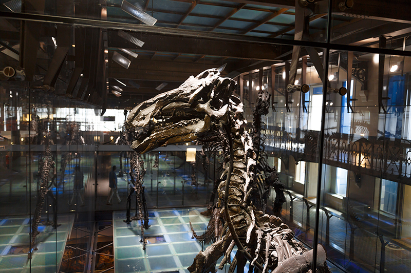 bruksel dogal tarih muzesi iguanodon dinozor