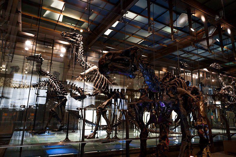 bruksel dogal tarih muzesi iguanodon dinozorlari