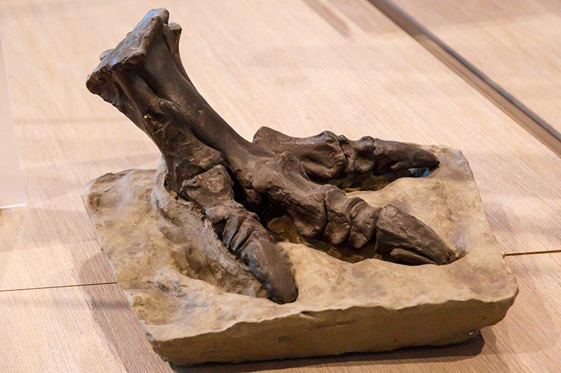 bruksel dogal tarih muzesi trex dinozor ayagi