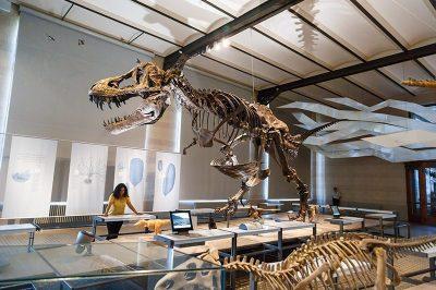 bruksel dogal tarih muzesi trex dinozor iskeleti 400x266