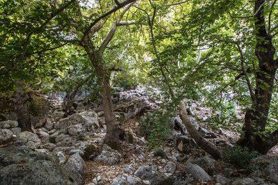 fethiye pinara antik kenti ormani 400x266