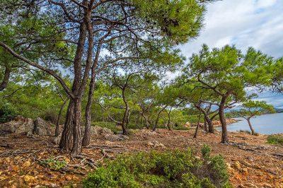 ayvalik cunda ortunc koyu plaji kayalik 400x266