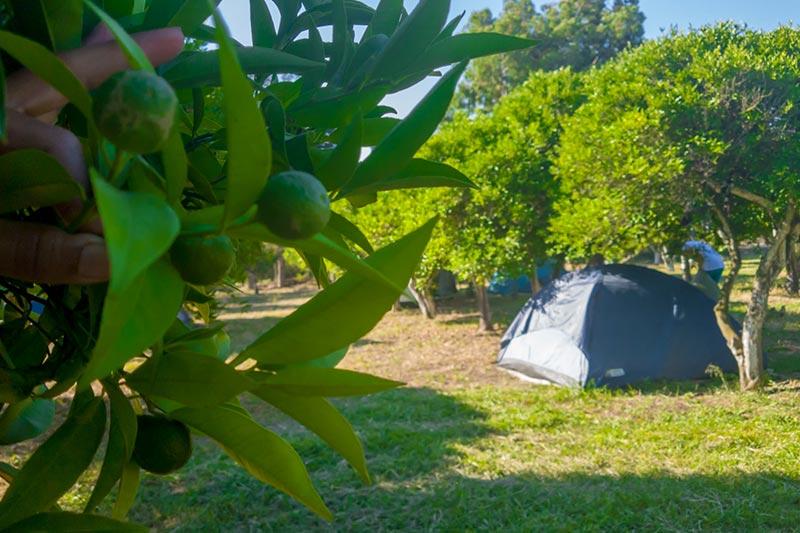 bodrum ecofarm cadir kamp alani