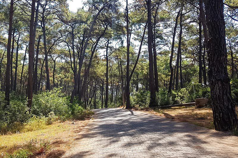 mugla akyaka orman kampi yollari